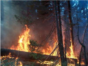 Picture of forest and trees burning