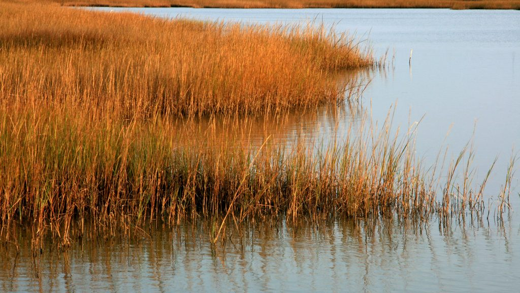 saltwater marsh in setting sun