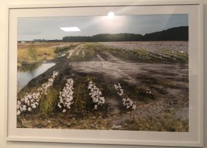 An image of a flooded field from the RISING exhibit portraying how the North Carolina coastal landscape has changed over time.
