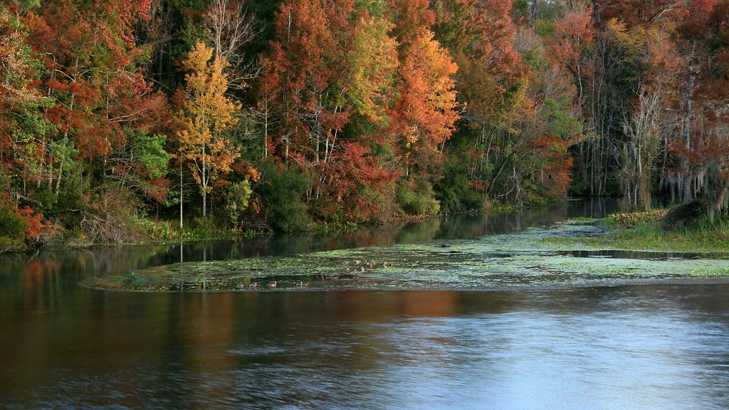 Leaves changing colors along the Wakulla River, Florida