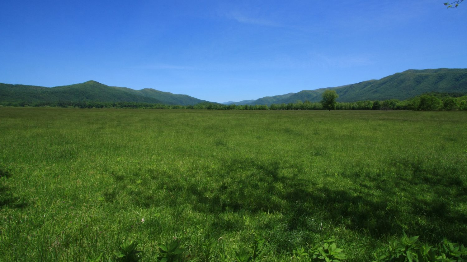 A vast view of the Cades Cove grassland in the Great Smoky Mountains National Park.