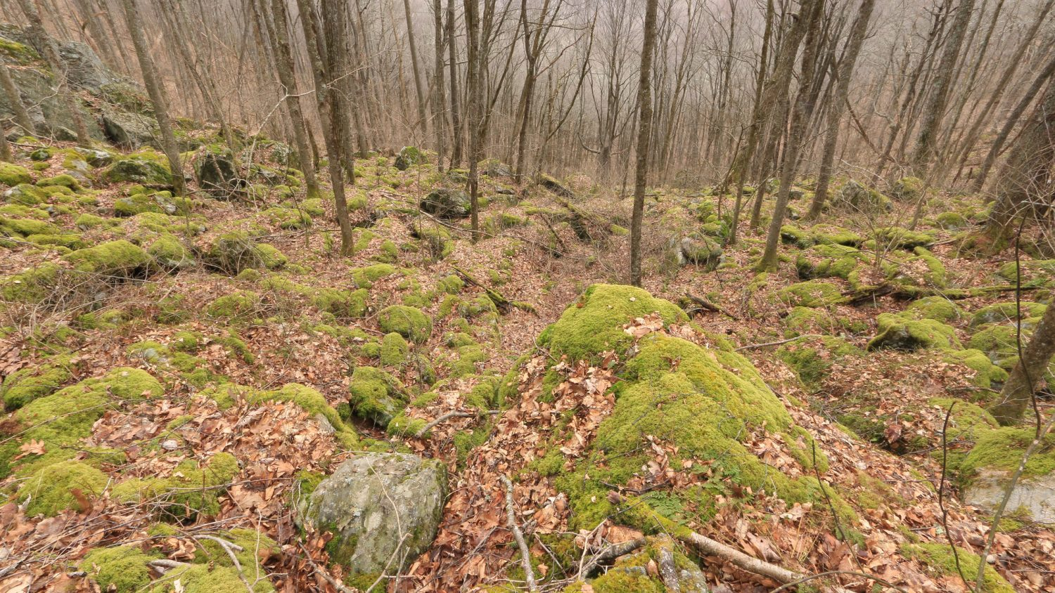 rocky forest scene