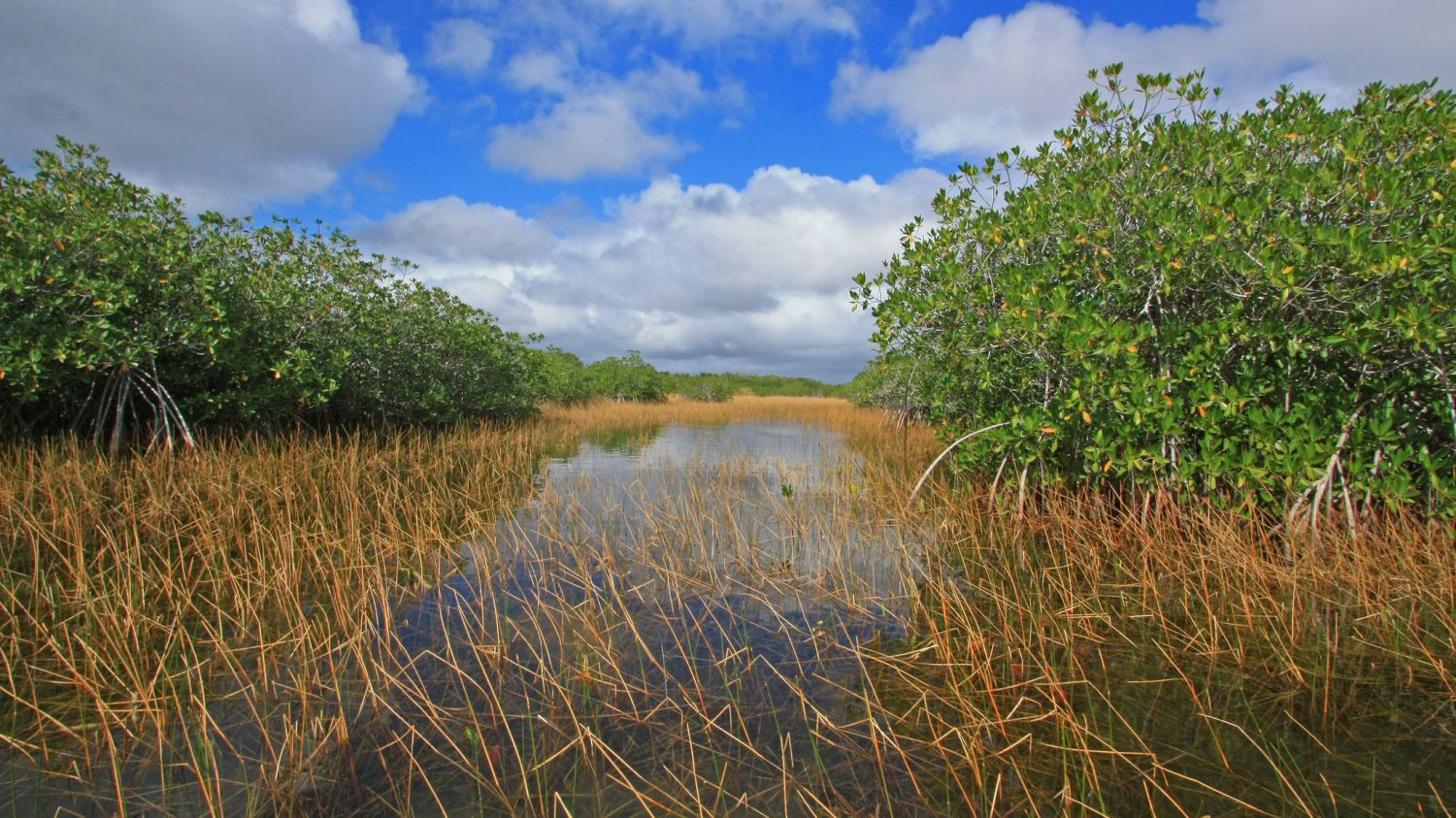 Nine Mile Pond canoe trail, Everglades National Park, Florida