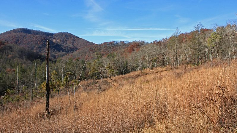 picture of forest hillside in NC