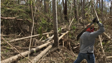 Graduate student, Ana Rivera, uses a machete to clear fallen trees after Hurricane Maria.
