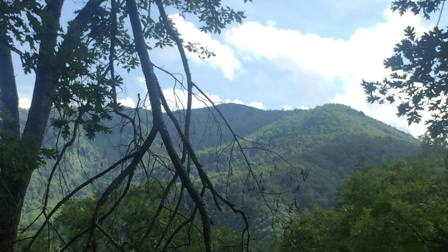 A view of vibrant green forested mountains.