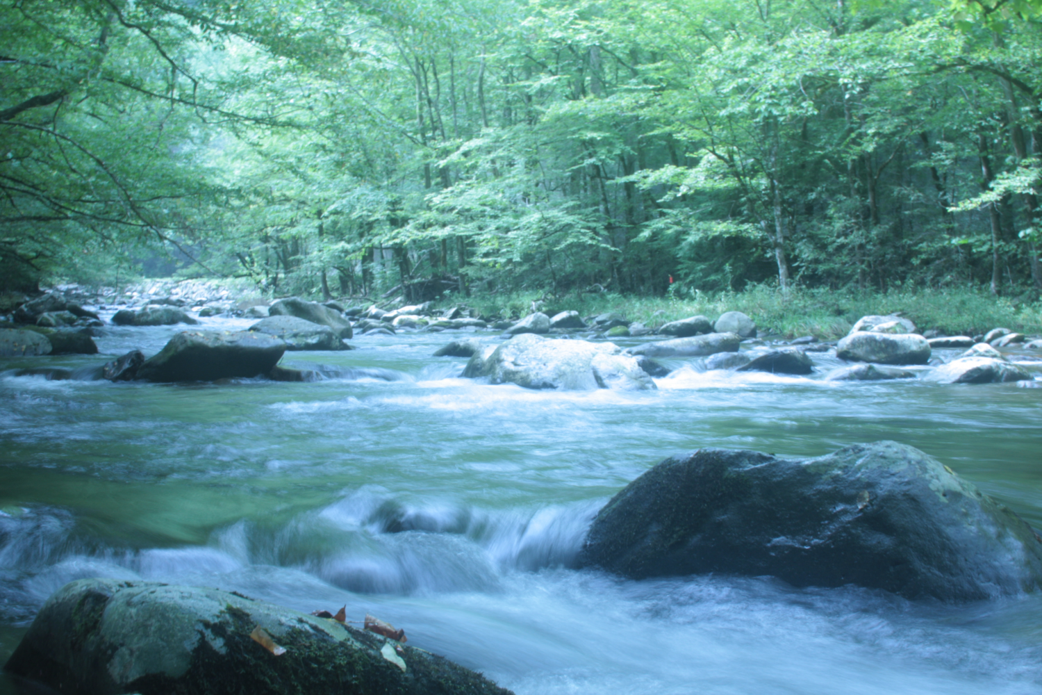 Water rushes downstream through large rocks in a creek surrounded by leafy green trees.