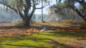 Prescribed fire burning near forest stand
